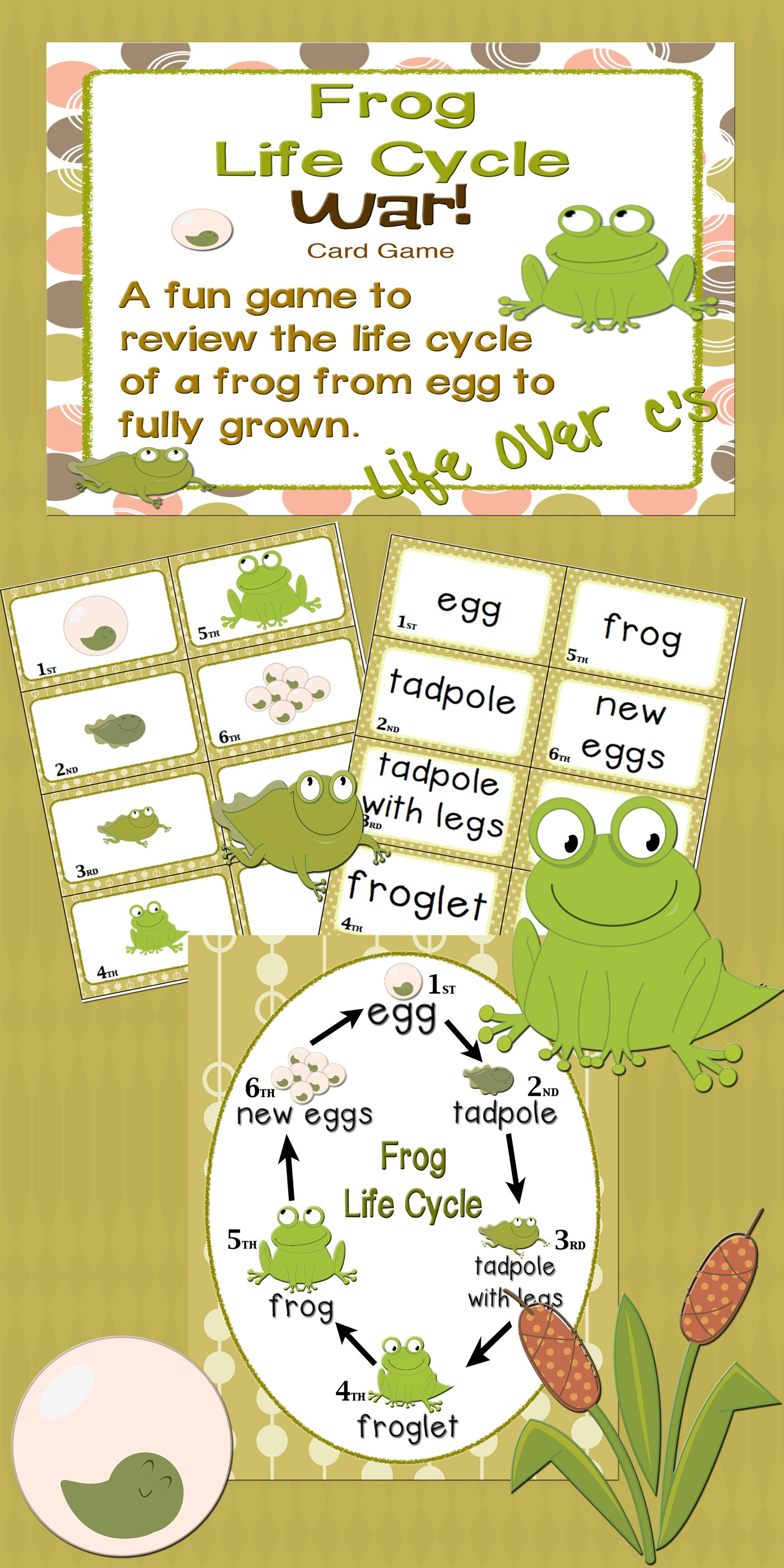 Sequencing With Frog Life Cycle War Card Game Science