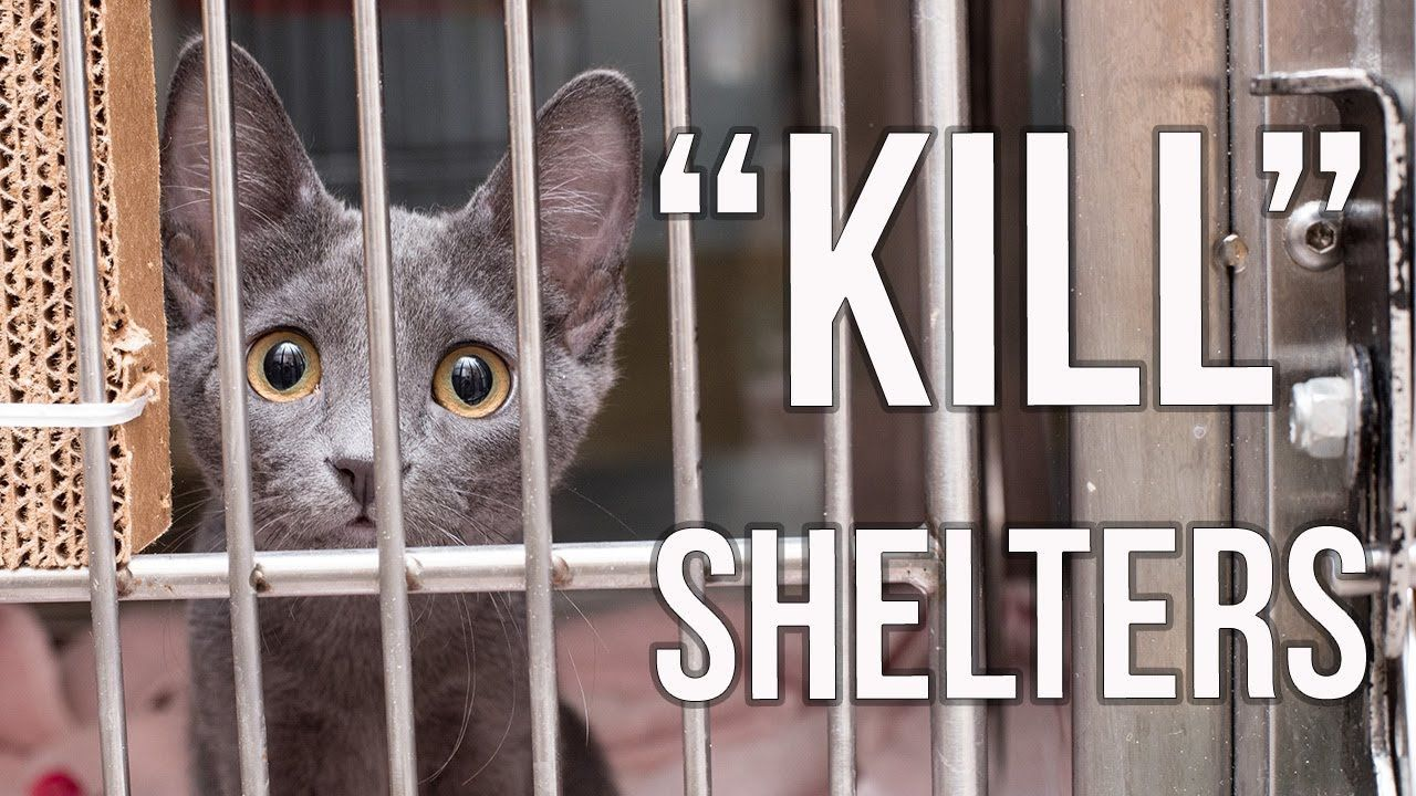 Why I Support Kill Shelters Youtube No Kill Animal Shelter Shelter Kittens Animal Shelter