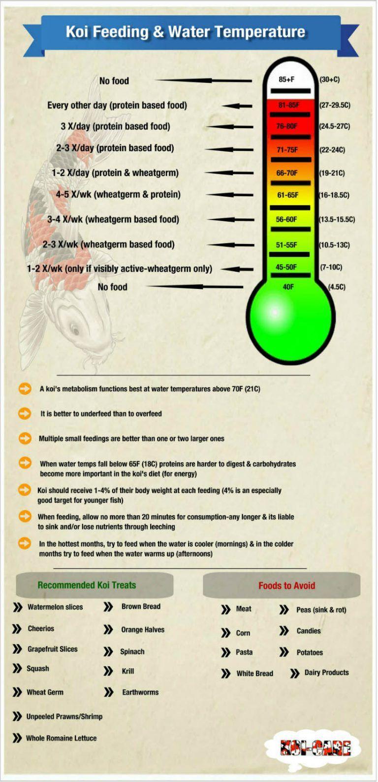 Feeding your koi as water temperatures change koi fish for Koi pond temperature