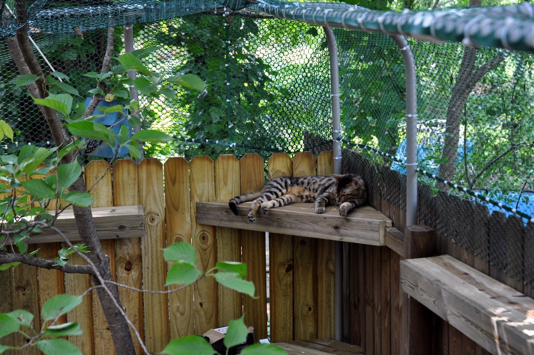 How To Create A Safe Outdoor Cat Enclosure Or Catio For