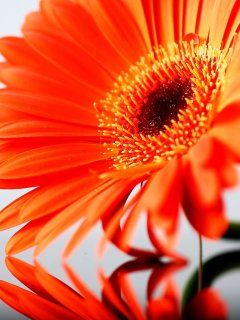 Download Orange Flower Wallpaper Mobile Wallpapers Flower Wallpaper Mobile Wallpaper Flower Mobile