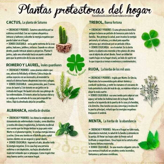 Food That Magically Regrows Itself From Kitchen Scraps: Plantas Protectoras Del Hogar