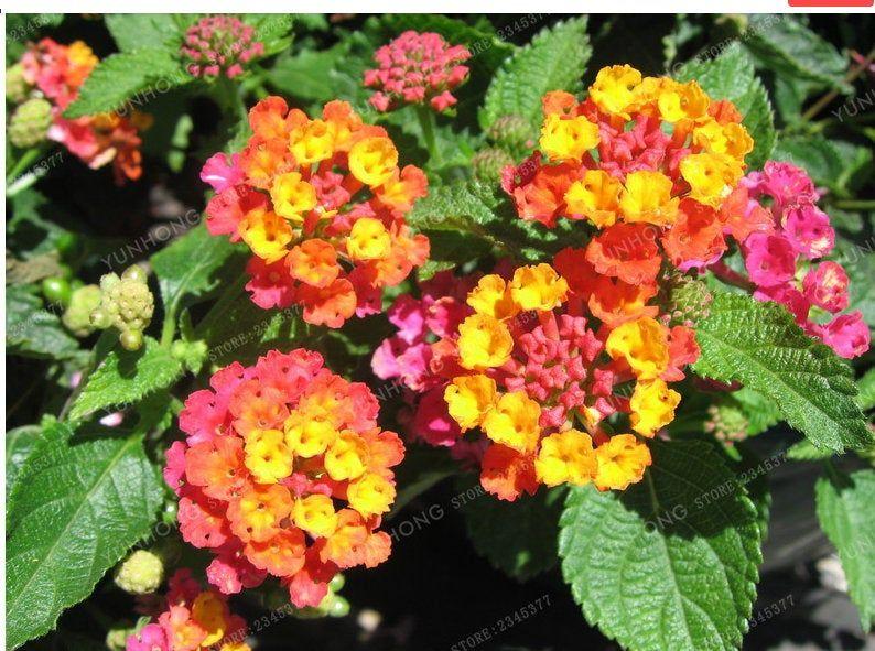 Tiltshiftgen Via Citizenbold Lantana Making Plant Pots Flower Pots