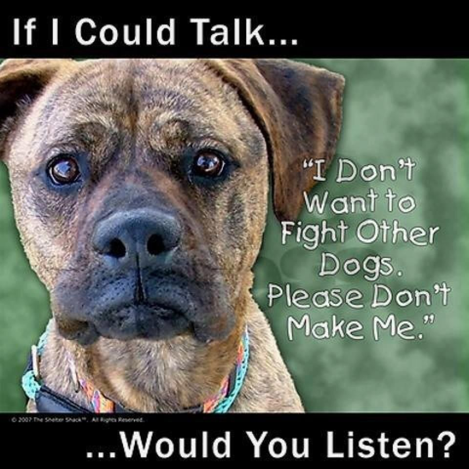 Pin By Bella Jewels On Mostly Dogs Esp Pit Bulls Dog Fighting