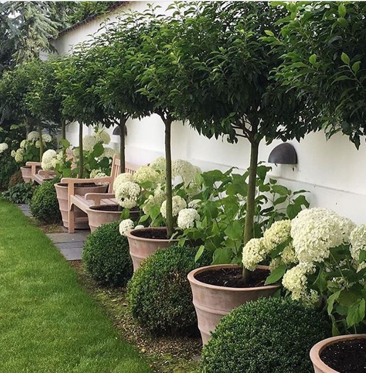 ok  jesse  this one is just perfect  topiary and box for winter garden  and hydrangea for summer