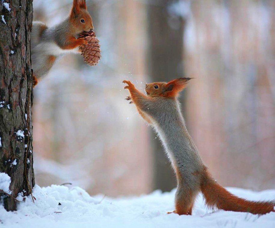 Животные зима приколы картинки