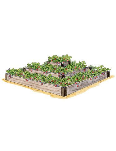 Strawberry Beds, 3-Tier Raised Strawberry Bed | Gardeners.com ... on loganberry plants, fig plants, cucumber plants, tomato plants, pomegranate plants, apricot plants, garden carrots, grape plants, pumpkin plants, garden plant protection from animals, garden cucumber, food plants, watermelon plants, blackberry plants, raspberry plants, blueberry plants, berry plants, black pepper plants, garden onion plants, almond plants,