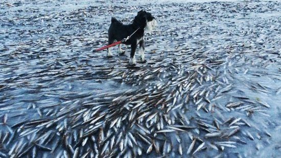 It got so cold so quickly in this Norwegian bay that it froze a bunch of fish swimming in it
