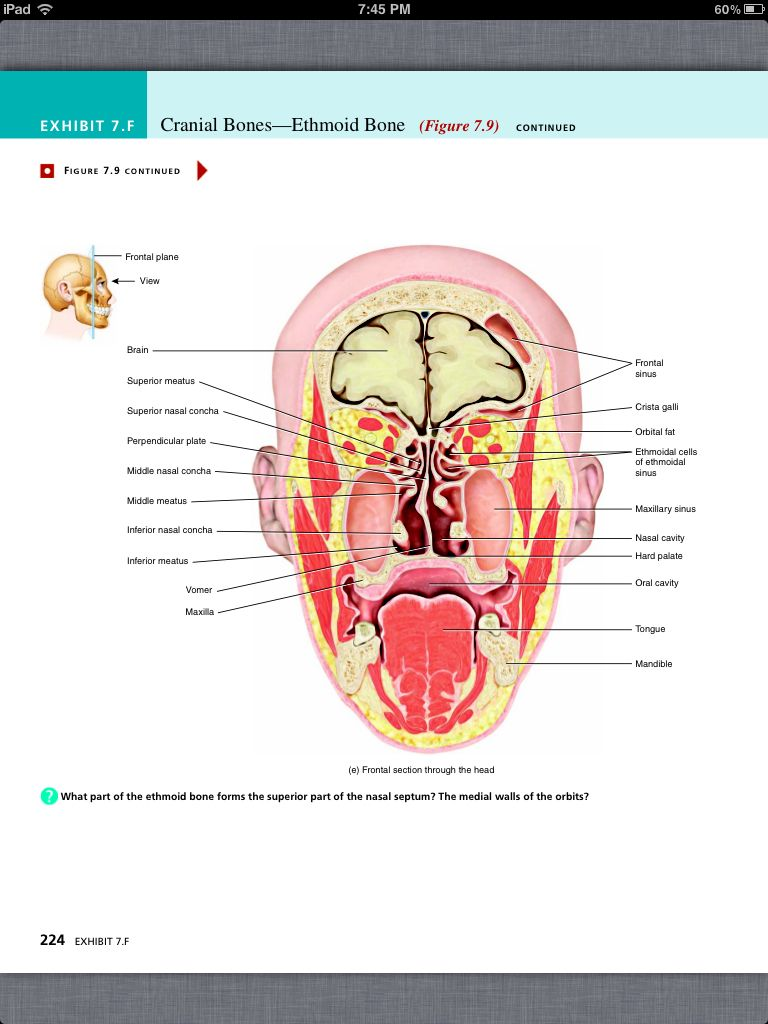 Anatomy Chapter 7 Image collections - human anatomy diagram organs
