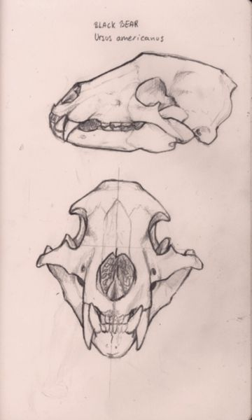 black bear skull art inspo pinterest bear skull bears and tattoo. Black Bedroom Furniture Sets. Home Design Ideas