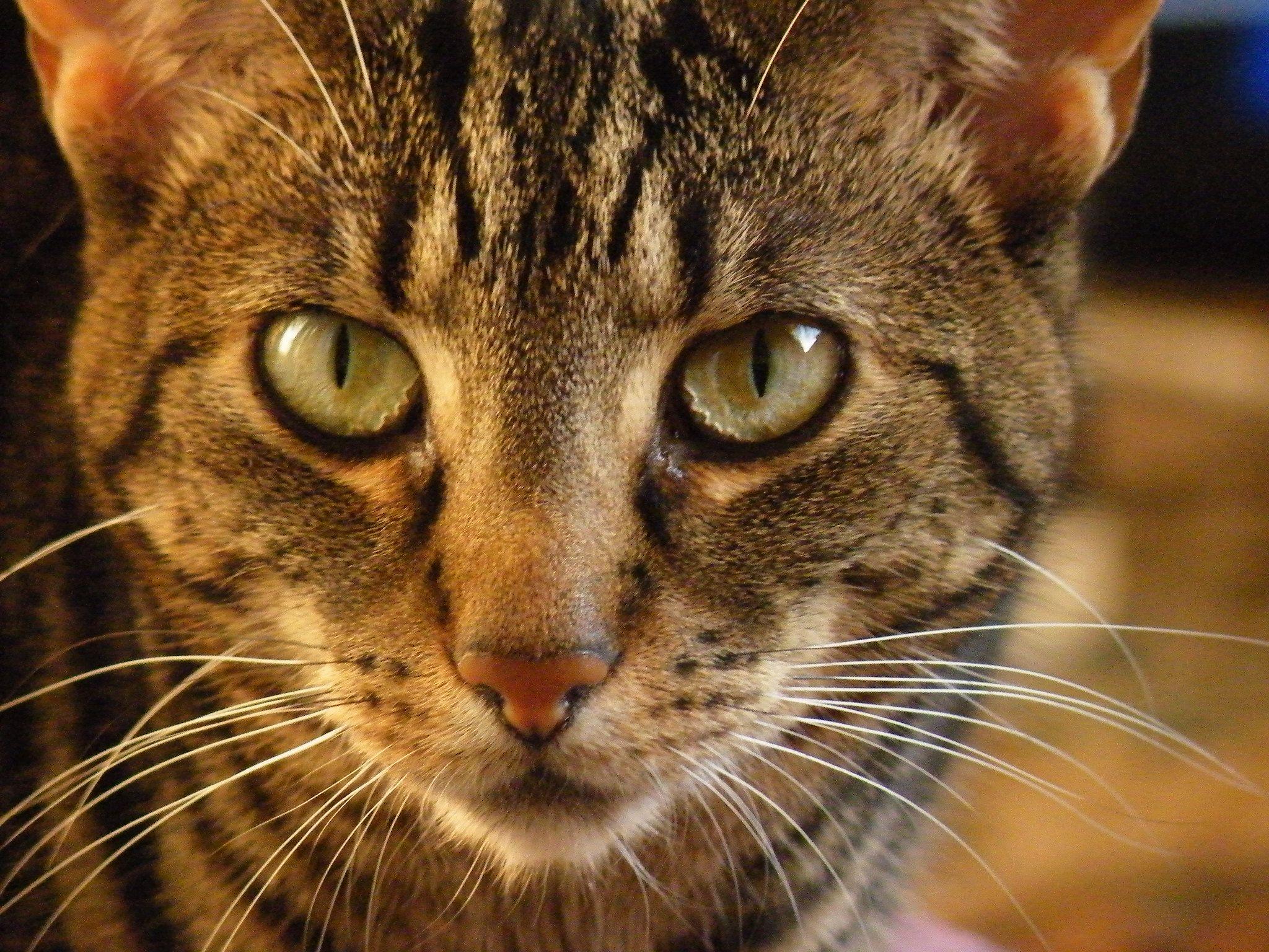 Bertie Bumski Crazy Cat People Cat People Cats