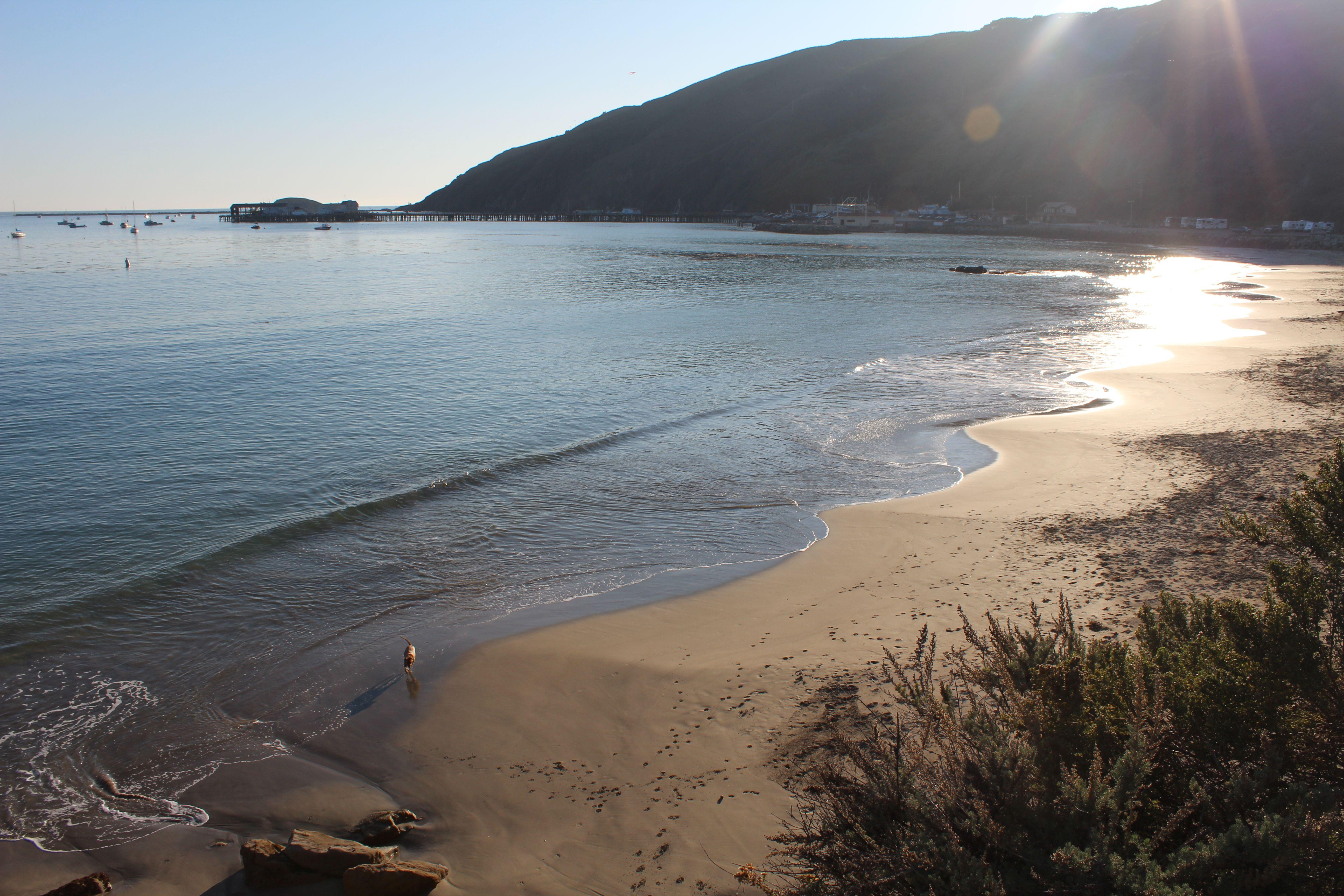 Dog Beach in Avila Beach, CA Dog beach, Beach, Pismo beach