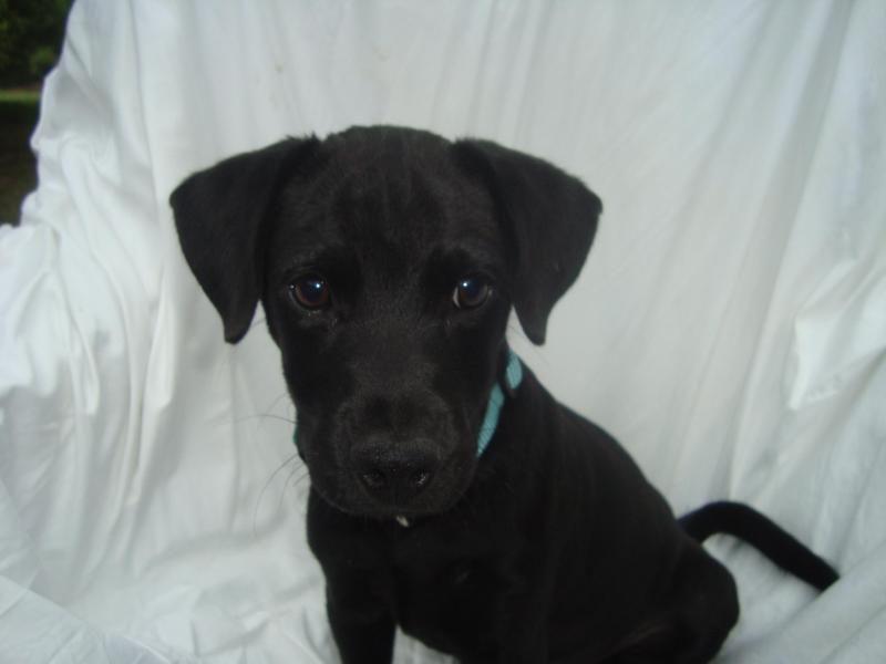 Adopt Fancy on Adoptable dachshund dog, Animal