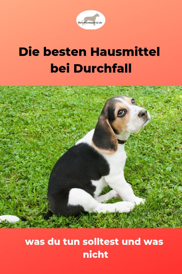 Durchfall Und Darmparasiten Naturlich Bekampfen Durchfall Hund Hundegesundheit Hundehaltung