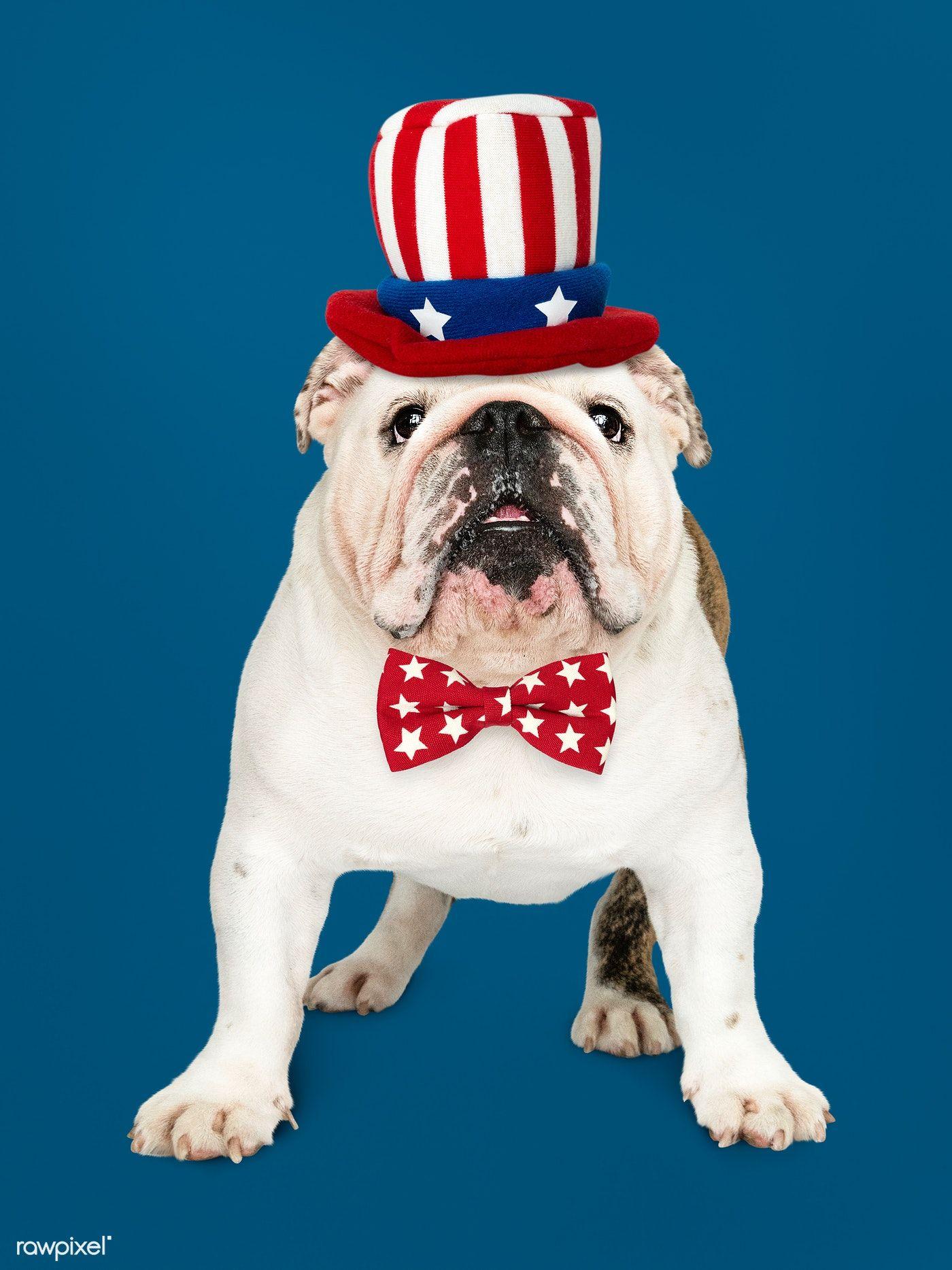 Download Premium Photo Of Cute White English Bulldog Puppy In