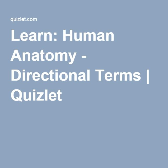 Learn Human Anatomy Directional Terms Quizlet Anatomy Phys