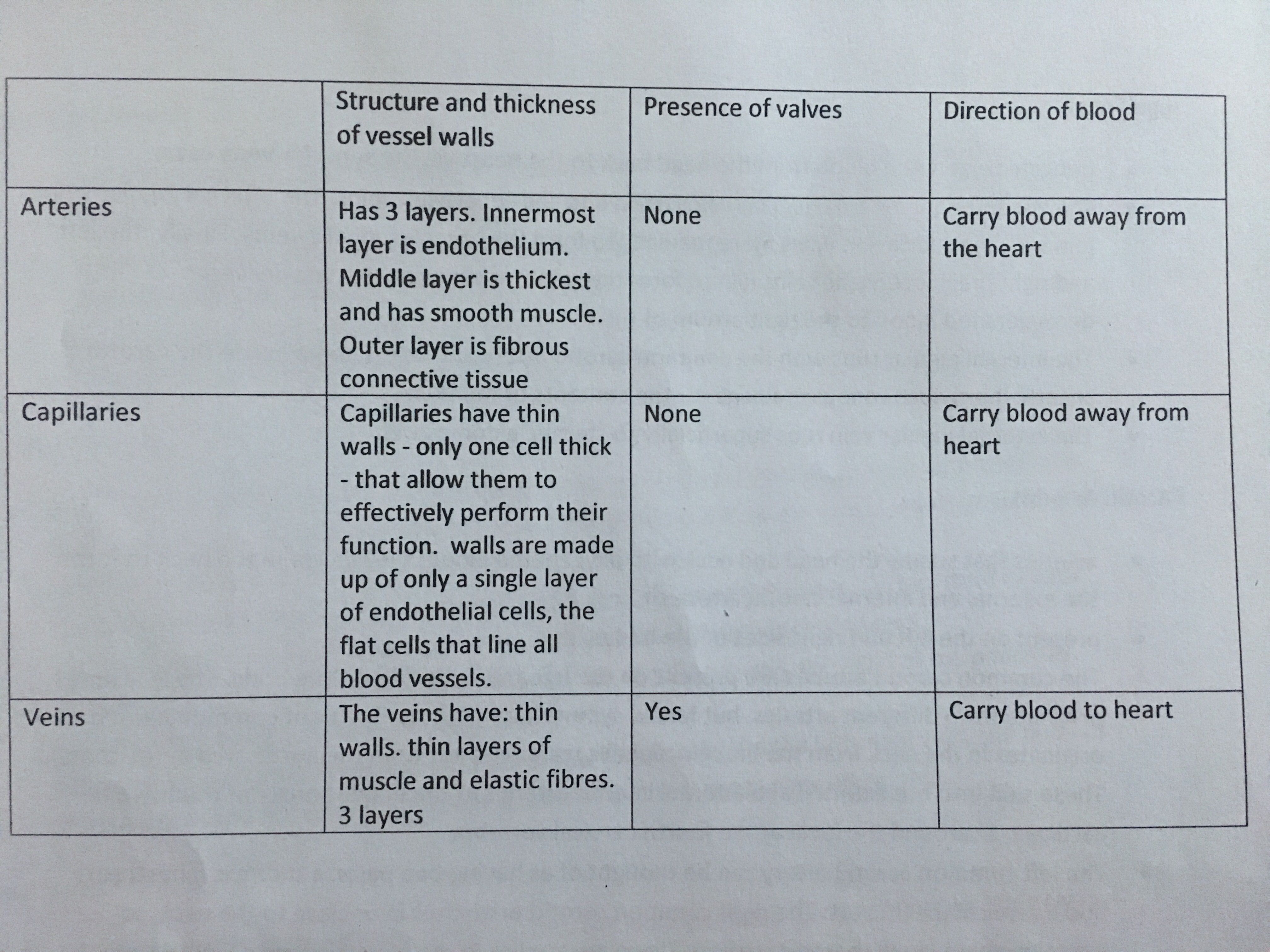 Differences Between The Three Types Of Blood Vessels