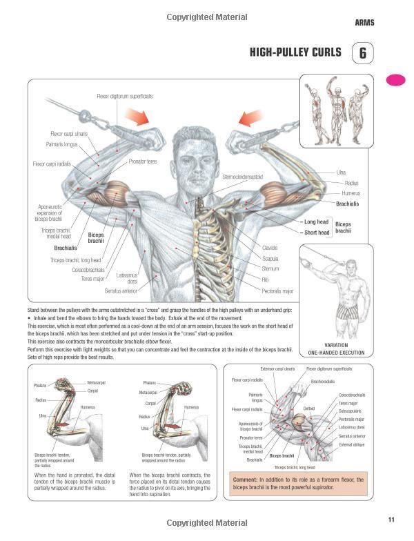 Strength Training Anatomy-3rd Edition: | Gym / Bodybuilding ...