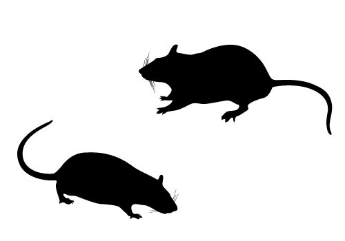 rat silhouette vector free download rat silhouette silhouette illustration silhouette vector rat silhouette vector free download