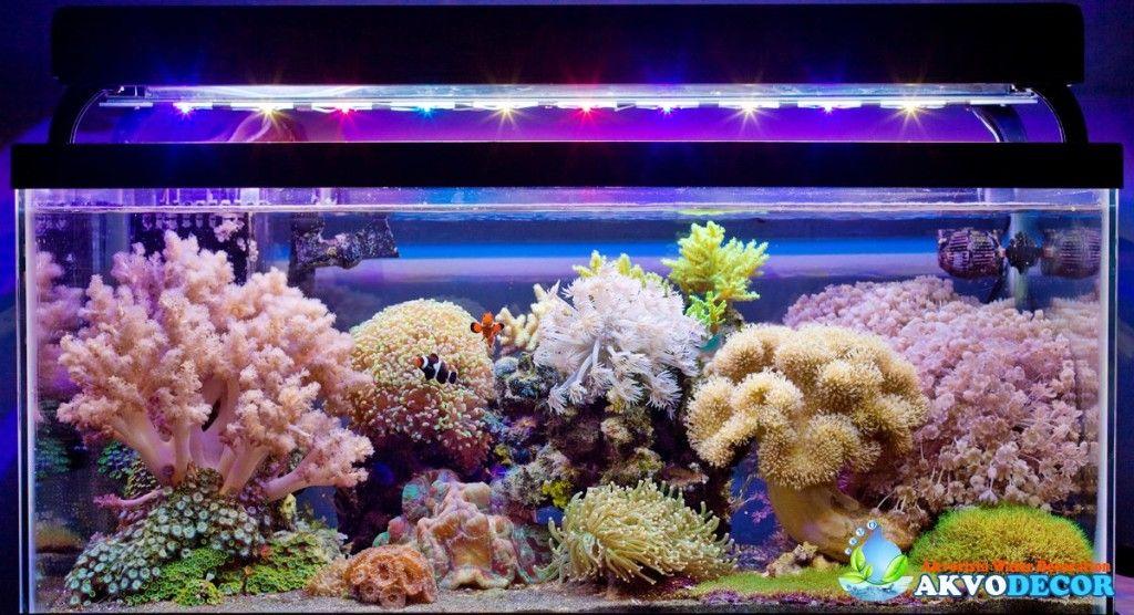 Toko Aksesoris Aquarium Jakarta Timur - Aksesoris Kita