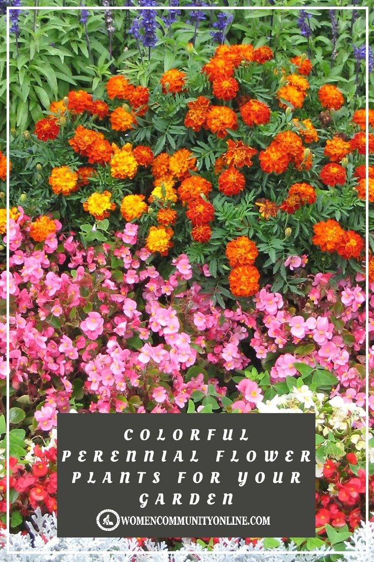 15 Best Perennial Flower Plants For Your Garden For The Home
