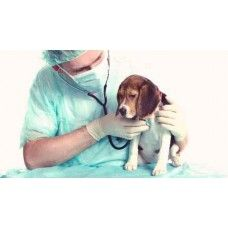 Pin By John Lee On Pet Medical Pet Medical Care Pet Medical