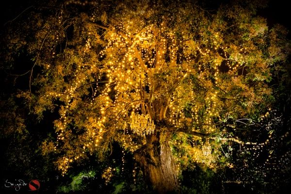 The Ever Twinkling Tree