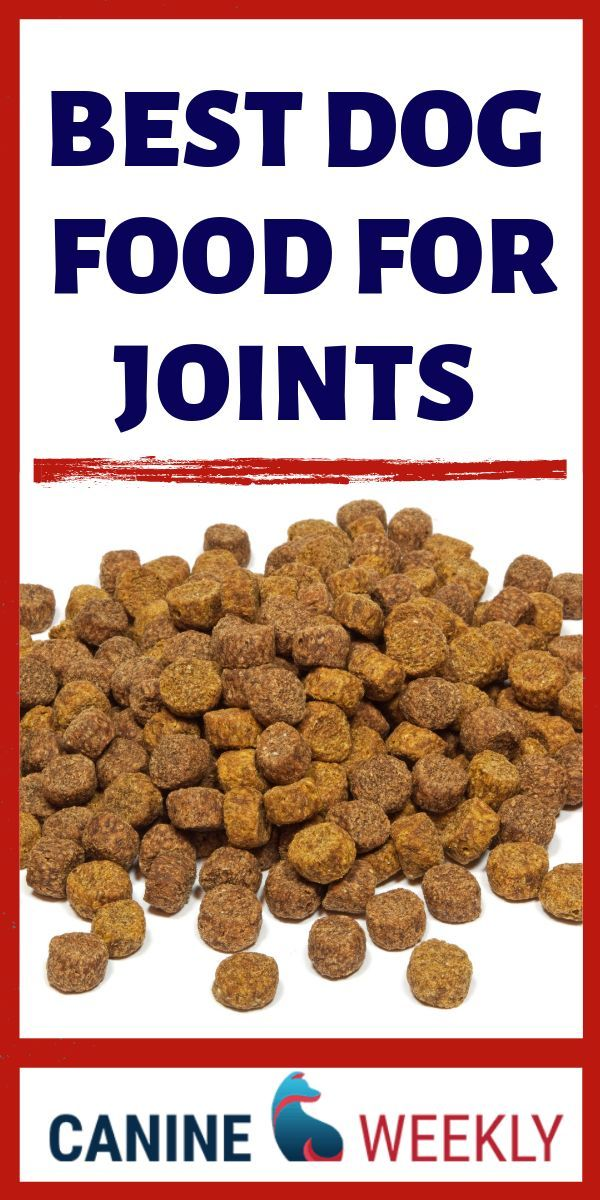 7 Best Dog Food for Arthritis and Joint Health in 2020