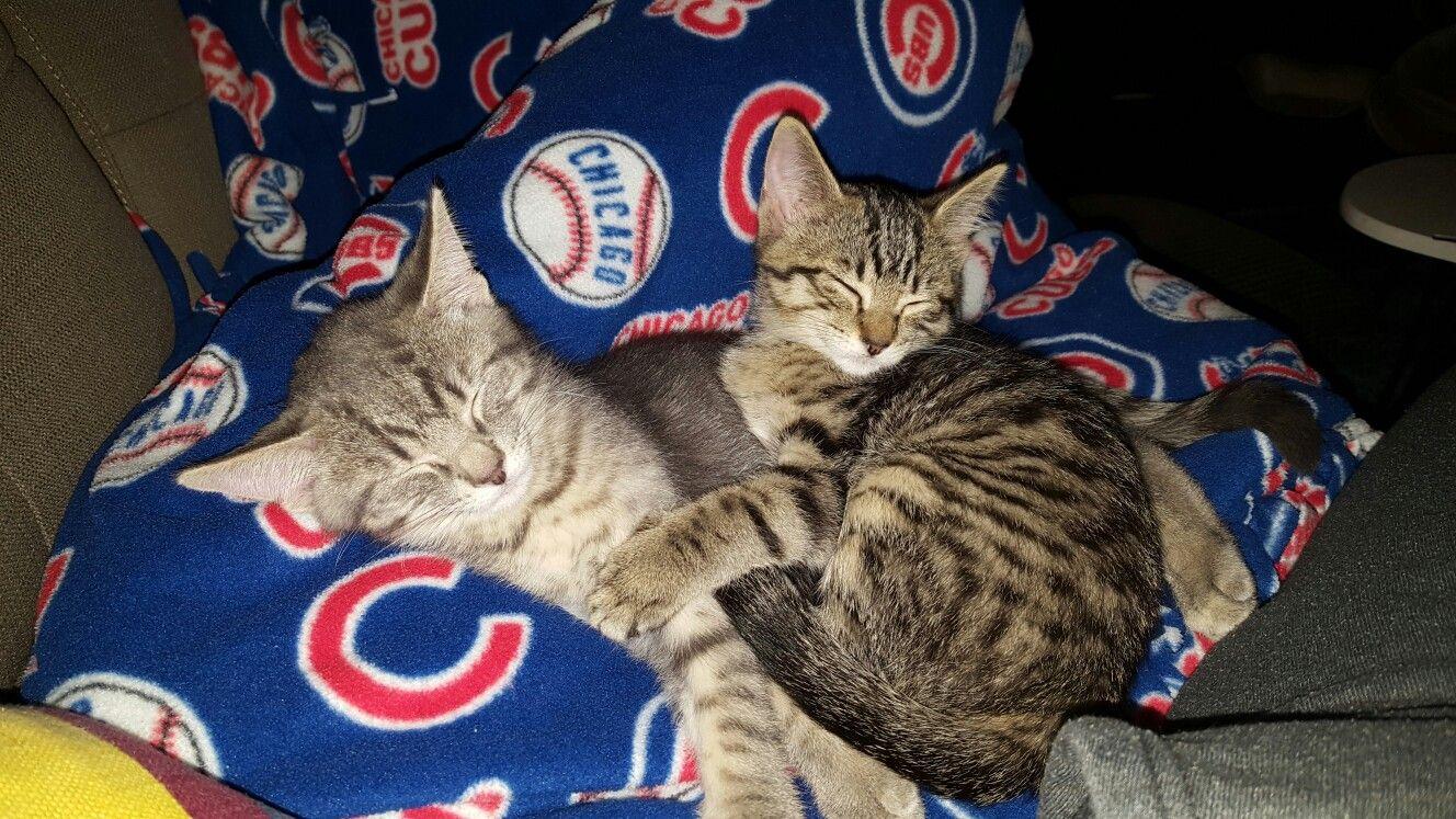 Gary And Winnie Font Graduates Of Kitten Academy Tabby Cat Cat Mom Kitten