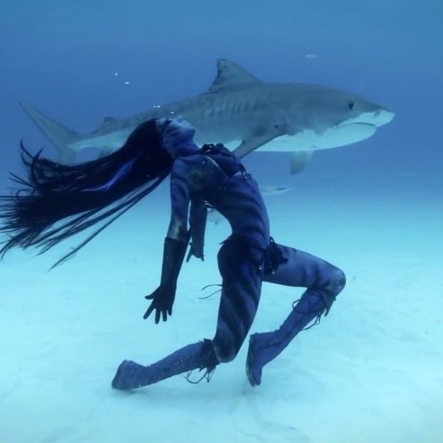 Dancing with Sharks - Instagram amazing video