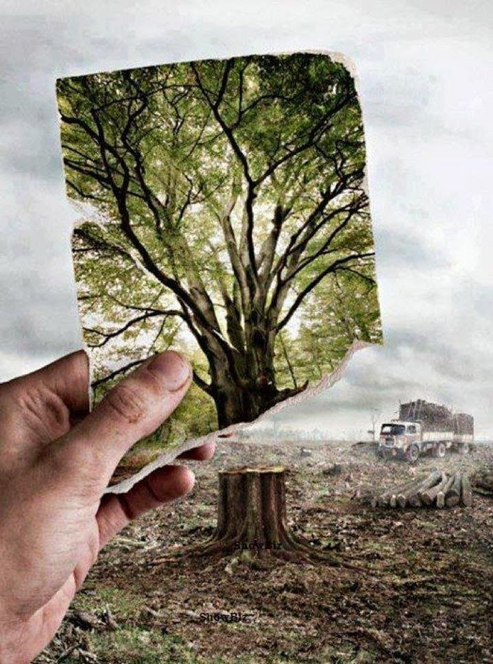 Million Dollar Pic. Save Trees. Environment photography