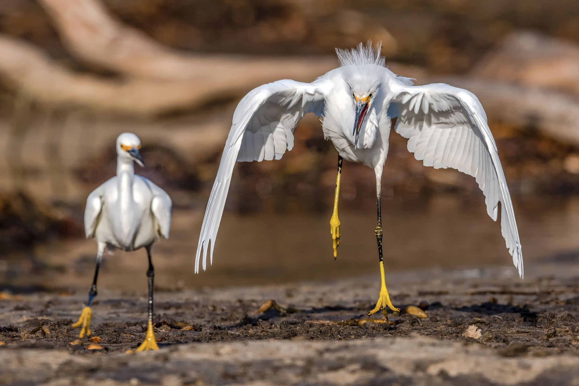 The 2019 Audubon Photography Awards: Top 100 -  The 2019 Audubon Photography Awards: Top 100 | Audubon  - #Audubon #Awards #fallskirtoutfits #Photography #photographyarticles #photographyawards #photographyessentials #photographyfilters #Top #wildlifephotography