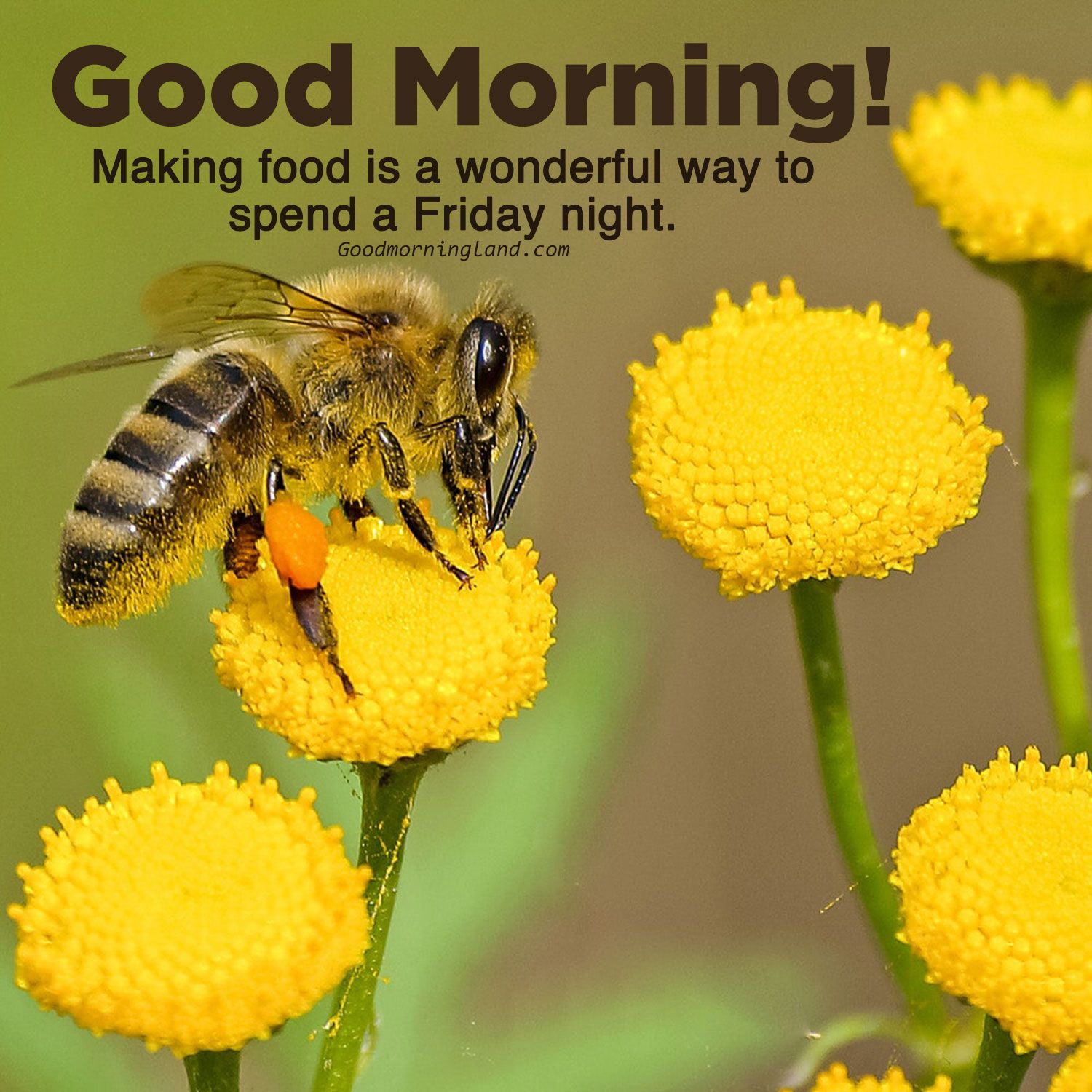 Download Love Good Morning Friday Images In