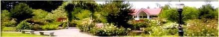 Photo of Annual plants  #shade #garden fern shade garden, shade garden design small sp,  #Annual #desi…