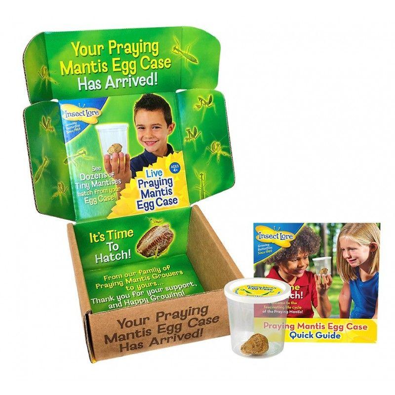 Live Praying Mantis Egg Case 4 5 6 7 8 9 10 11 12 13 14 15 16 17 Y Zoology Praying Mantis Pray Case
