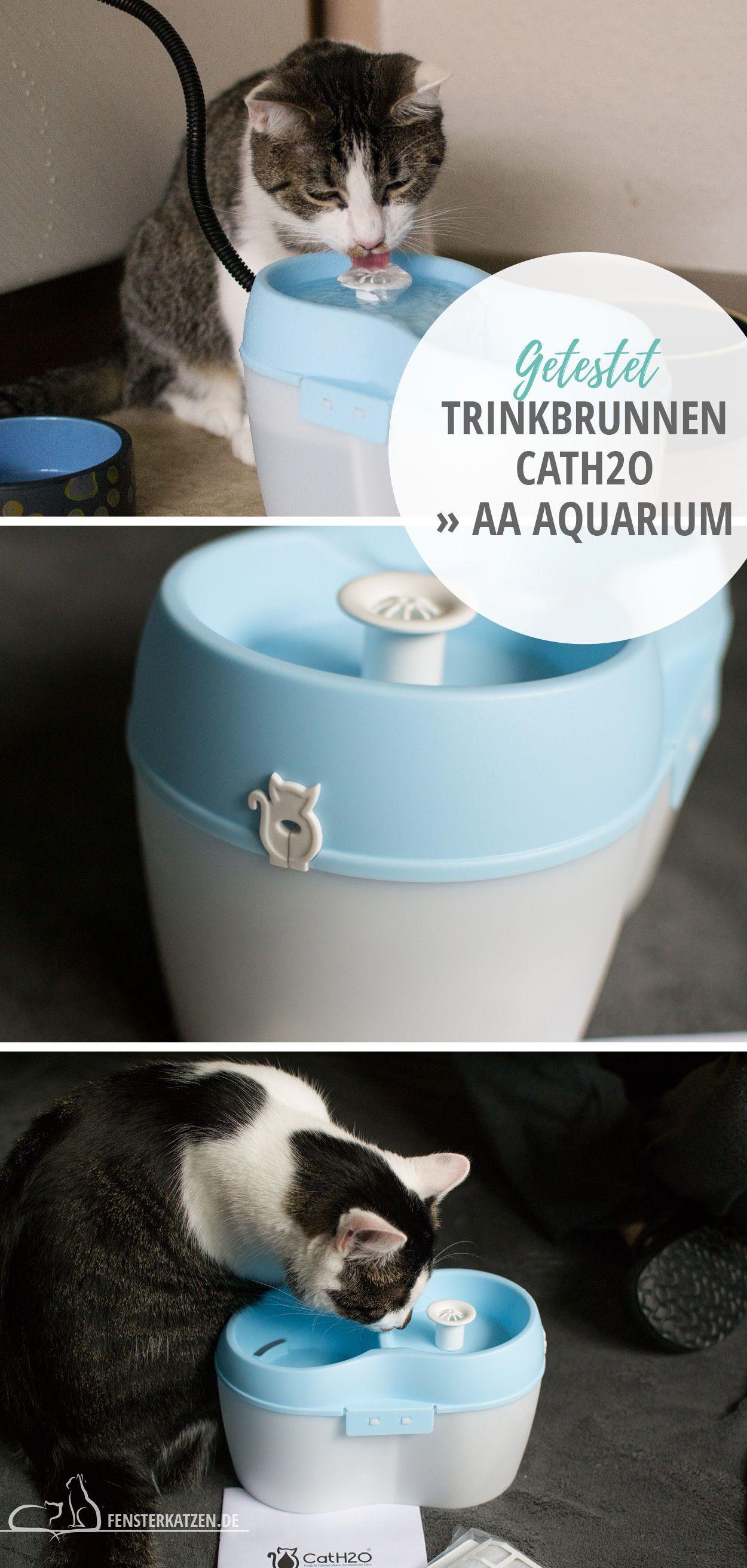 Trinkbrunnen Cath2o Aa Aquarium Getestet Trinkbrunnen Katzenhaltung Katzen