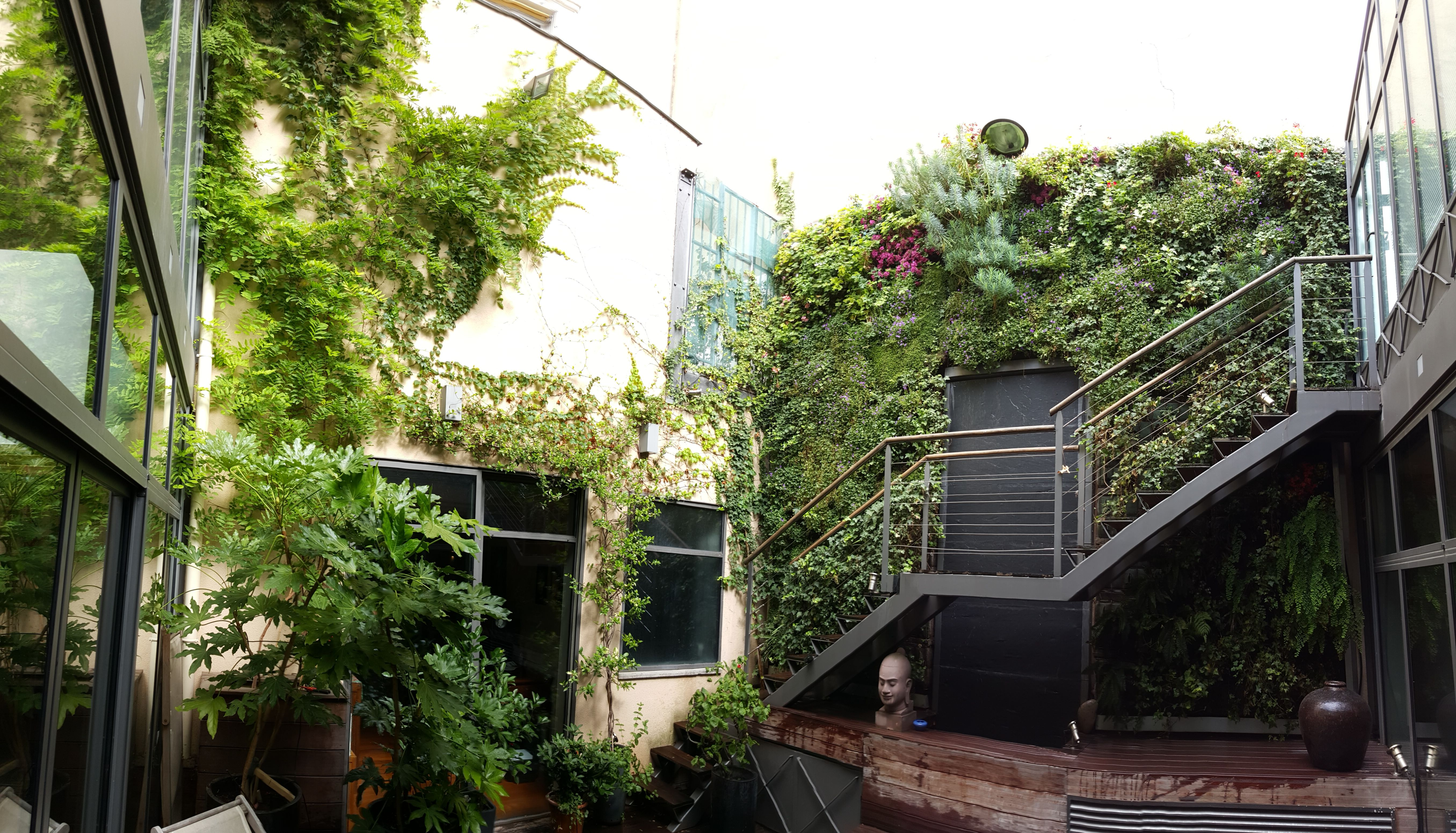 #murvegetal #5ans après #Création et #Réalisation #RootsPaysages #paysagiste #Yvelines #Châteaufort #Greenwall #UNEP #Plantes #Euphorbe #Campanules #Lamedeau #eau #patio #jardin