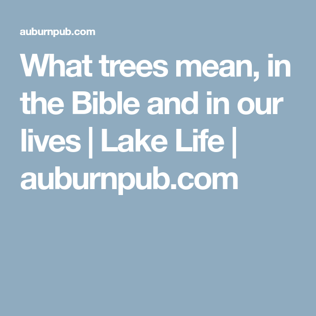 What Trees Mean In The Bible And In Our Lives Lake Life