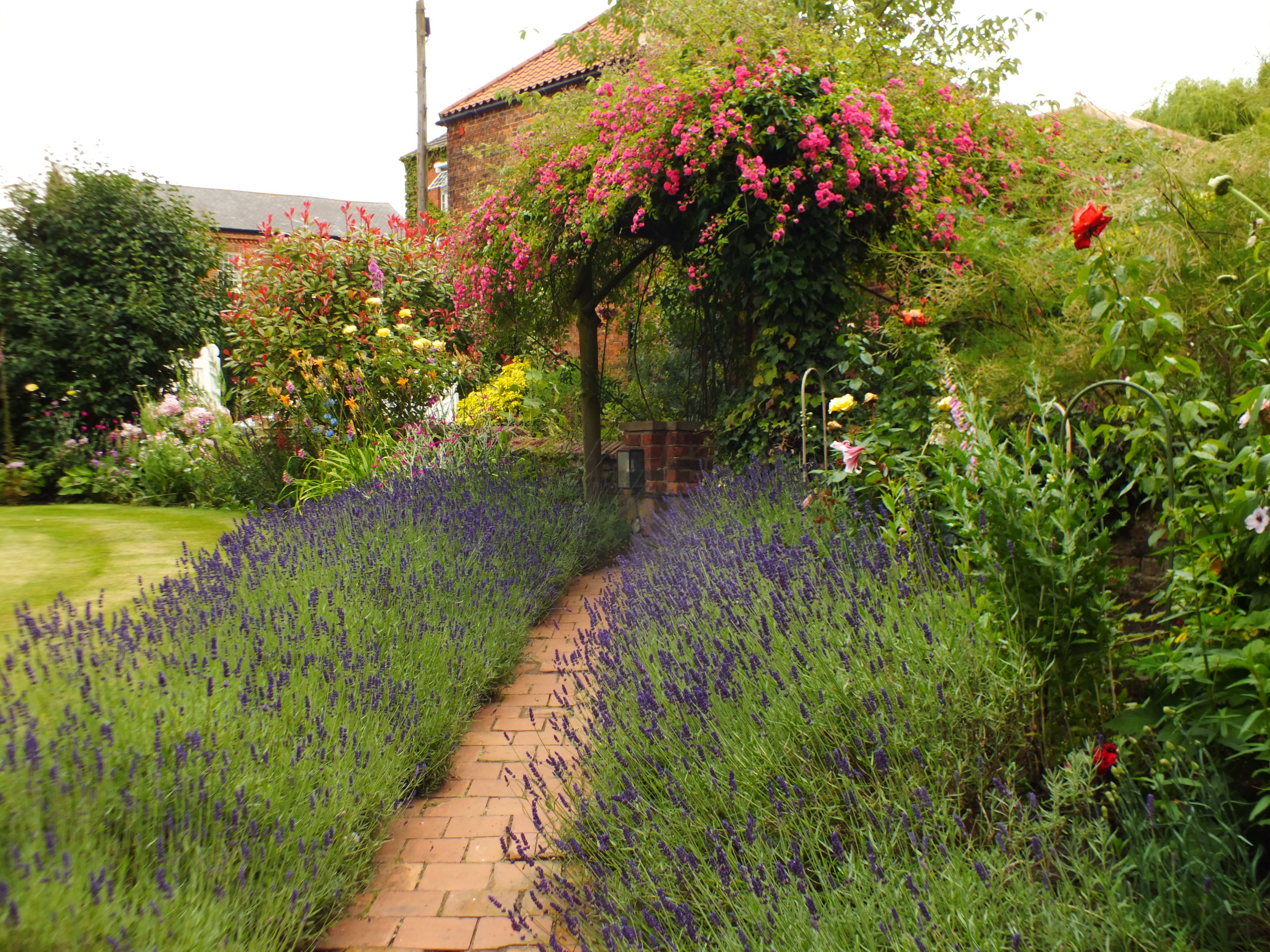 A lavender pathway