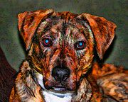 Pitbull Photo Posters - Mans Best Friend  Poster by Scott Wood