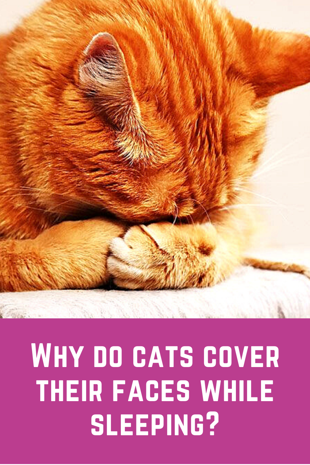4 Reasons Why Cats Cover Their Faces While Sleeping In 2020 Cats Cat Facts Cat Shirts Funny