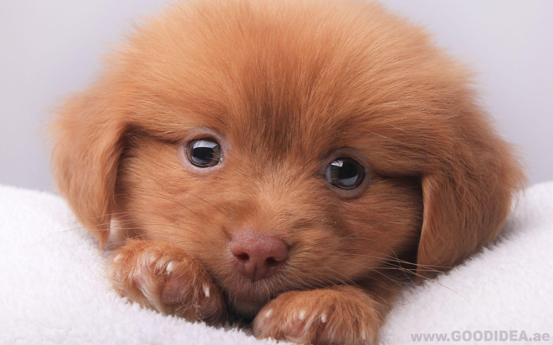 Hounds Follow Those Who Feed Them Good Idea Pet Shop Dog Pet Mansbestfriend Love Puppy Boy Bab Cute Animals Puppy Eyes