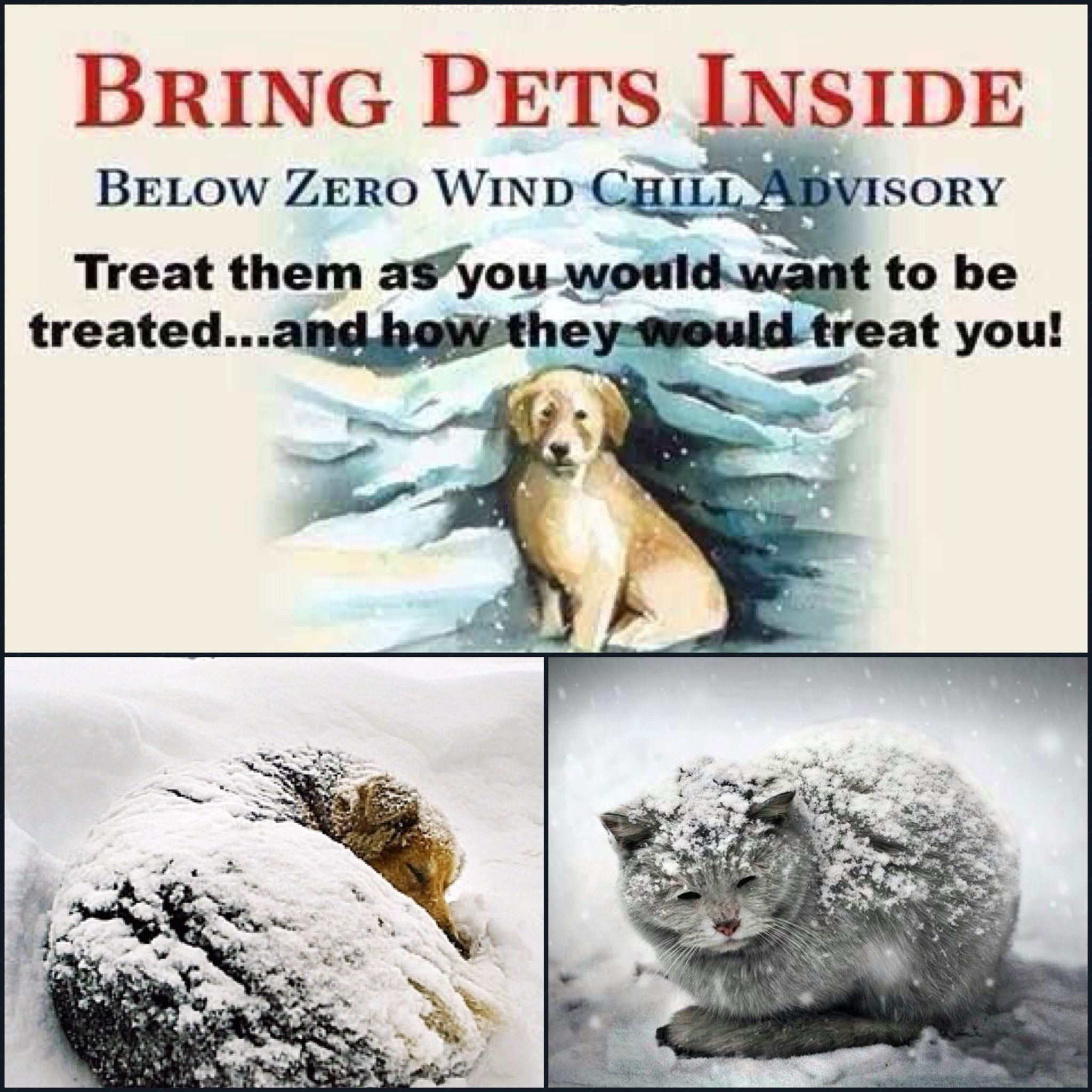 Bring Pets Inside Pets Bring It On Human Rights Abuse