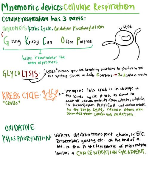 A Study In Chartreuse Biology Memes Study Biology Biology Notes