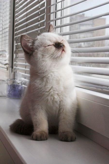 kitty in the sun
