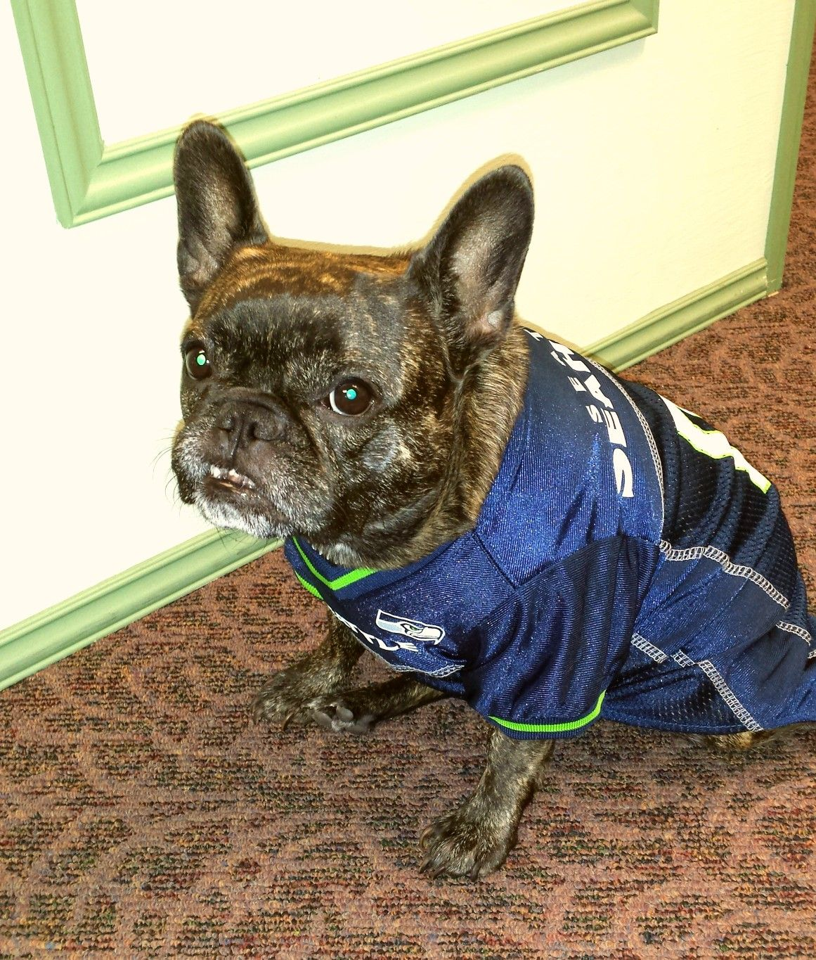 Pin by Eusibius Hewitt on Seahawks Seahawks, Seattle