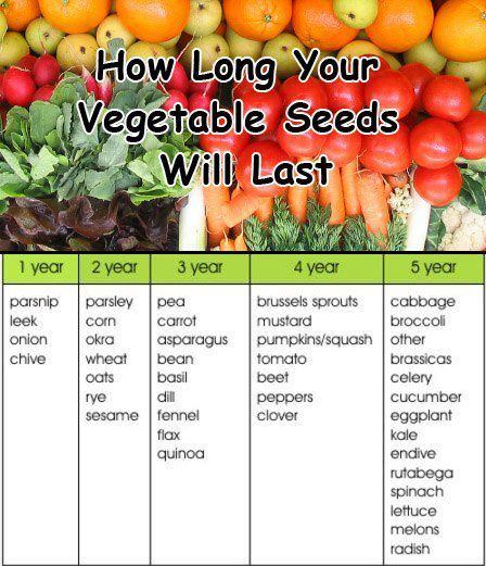 How Long Do Your Veggie Seeds Last