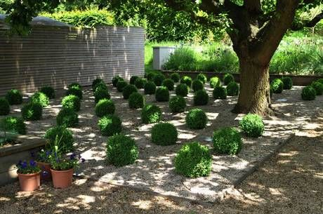 grid of box balls GARDEN DESIGN Pinterest Gardens