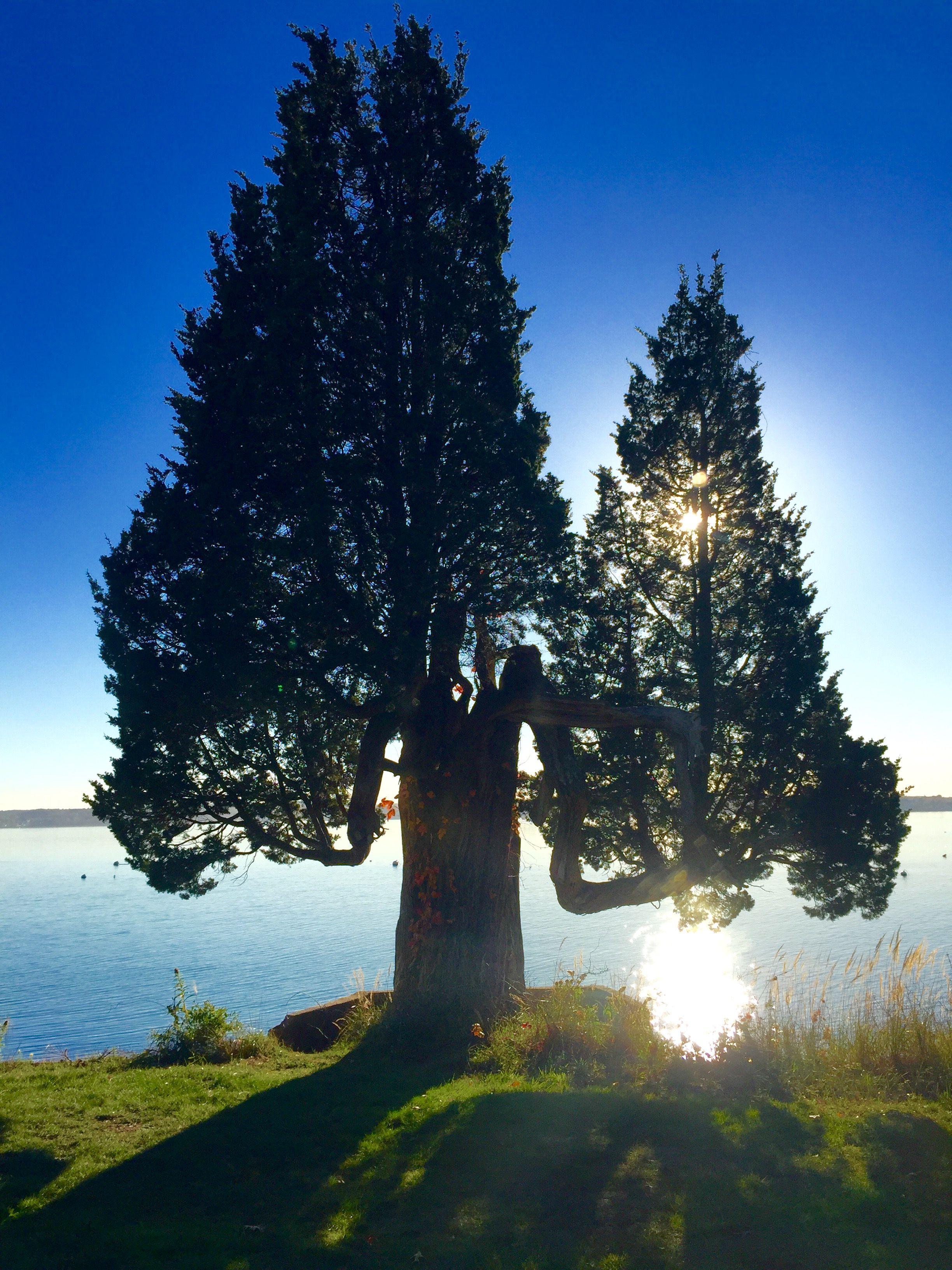 Прикольные картинки деревья, признанием любви любимому