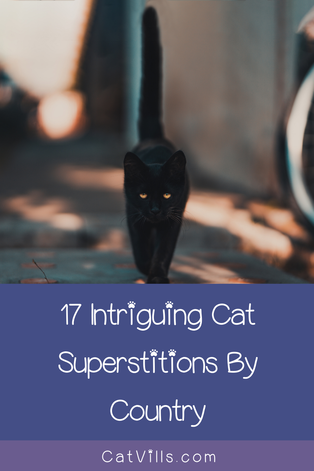 17 Intriguing Cat Superstitions By Country Cat breeds